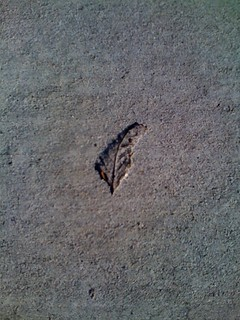 leaf on sidewalk, circa 2008 | by Lisa Padilla