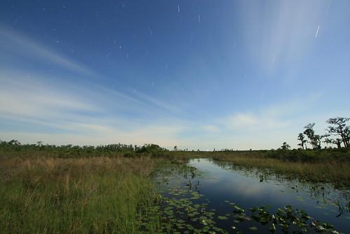 night view looking northeast, green canoe trail, bluff lake shelter, okefenokee national wildlife refuge, charlton county, georgia 1   by Alan Cressler
