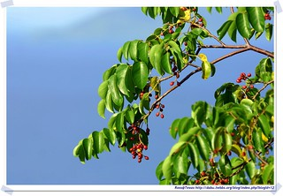 20041020_Guana@BVI_Unkown Plant_001_A | by rosstsai