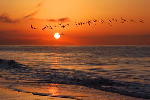 birds silhouette beach california coast santabarbara qualitypixels nikon d100 nikond100 january 2006 eastbeach geotagged zen free creativecommons