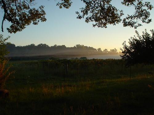 mist sunrise farm