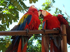two macaws talking