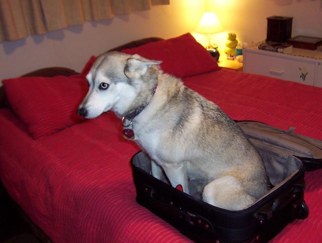 Viajar con Perro o Gato
