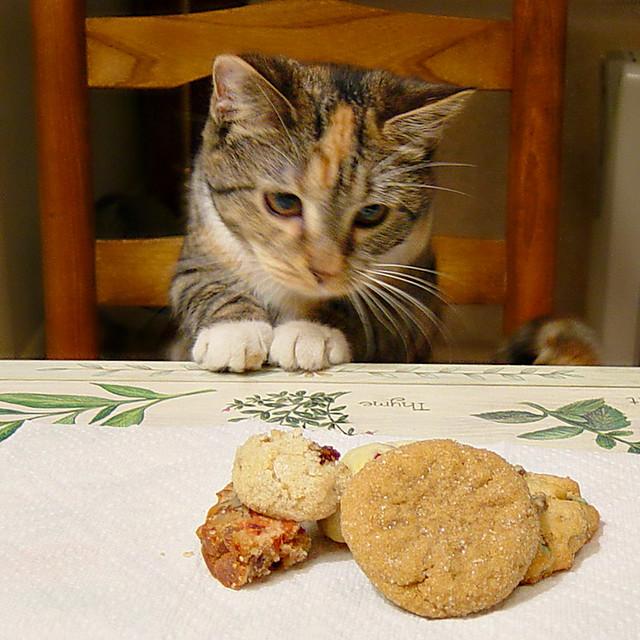 Gracie, our older cat 29 December 2007 006