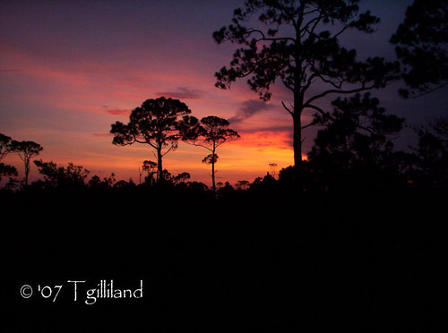 morning beach silhouette sunrise florida
