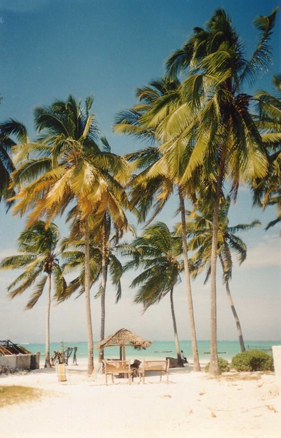Palm Trees on the Beach in Zanzibar