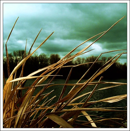 grass river dried remnants husks easterweekend gloomysunday evennowtheskythreatenstosnow morosemotherfucker thelonelyseason forgedmemories