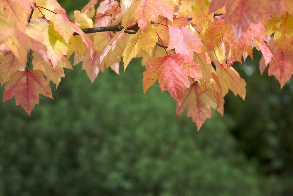 Leaves by Jeff Carlson