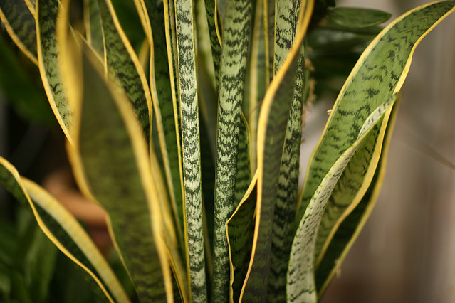 Non-flowering Plant | palmgo | Flickr on green house plants, purple house plants, blue house plants, lavender house plants, tropical house plants, moss house plants, orange house plants, evergreen house plants, easy to take care of house plants, cacti house plants, flowers house plants, dead house plants, perfect house plants,