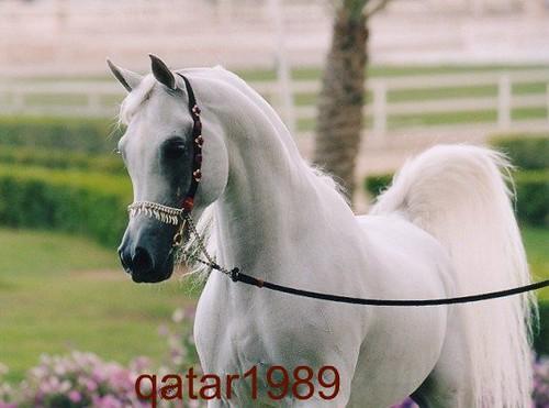 qatar1989