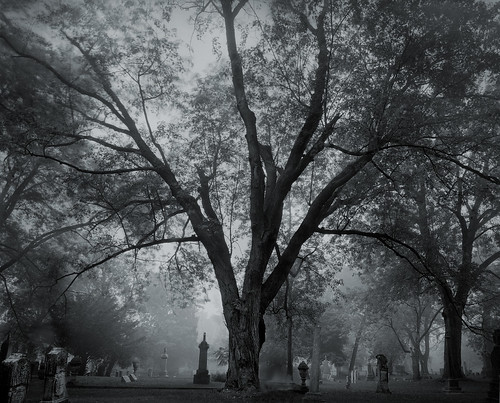 blackandwhite bw tree grave wisconsin death gloomy branches cemetary tomb tombstone gothic morbid doom gnarly 4x5 delta100 90mm crypt twisted ilford largeformat gnarled twisty portwashington shenhao portwashingtonwi