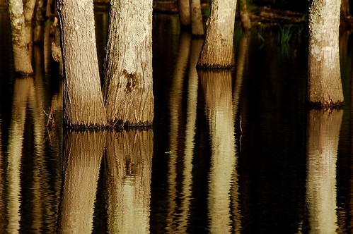 light sunset sun sunlight reflection tree nature water beauty d50 gold golden natural northcarolina raleigh swamp shimmering nikkor18200mmvr nikonstunninggallery bitzcelt impressedbeauty