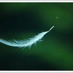 Drifting in dreams  |  ഒരു തൂവല് പോല് .....