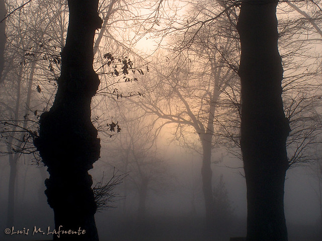 bosque en la niebla