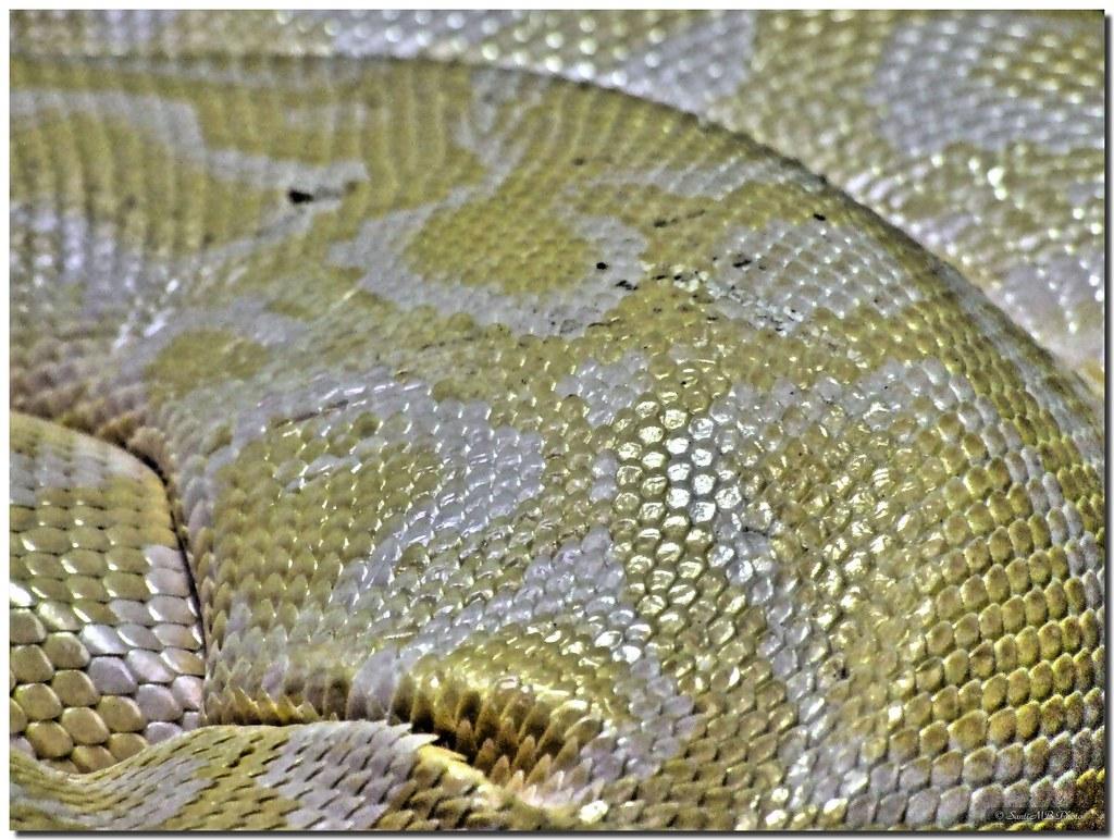 Reptilian shine / Brillo reptiliano by SantiMB.Photos