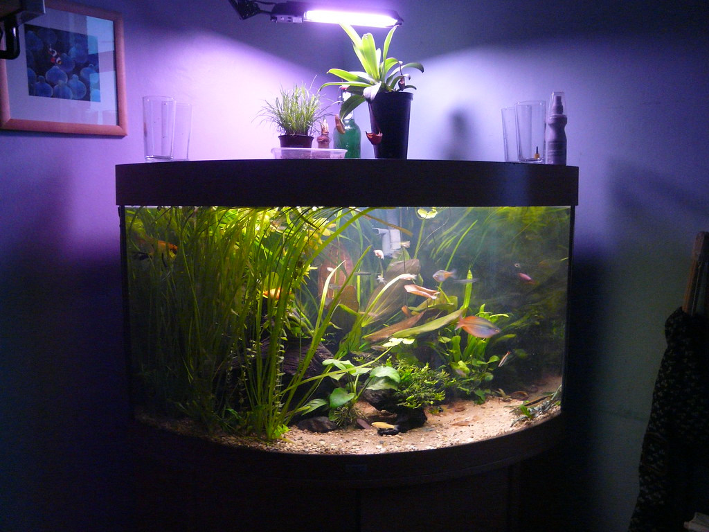 Image result for Fish Tank Maintenance