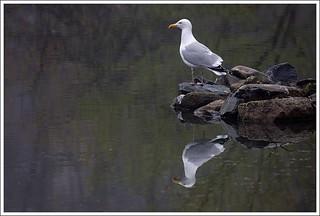 Griffen's Pond Sentinel | by Iguanasan