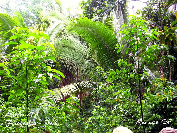 Vegetación En La Selva Baja Del Peru Marcos Gp Flickr