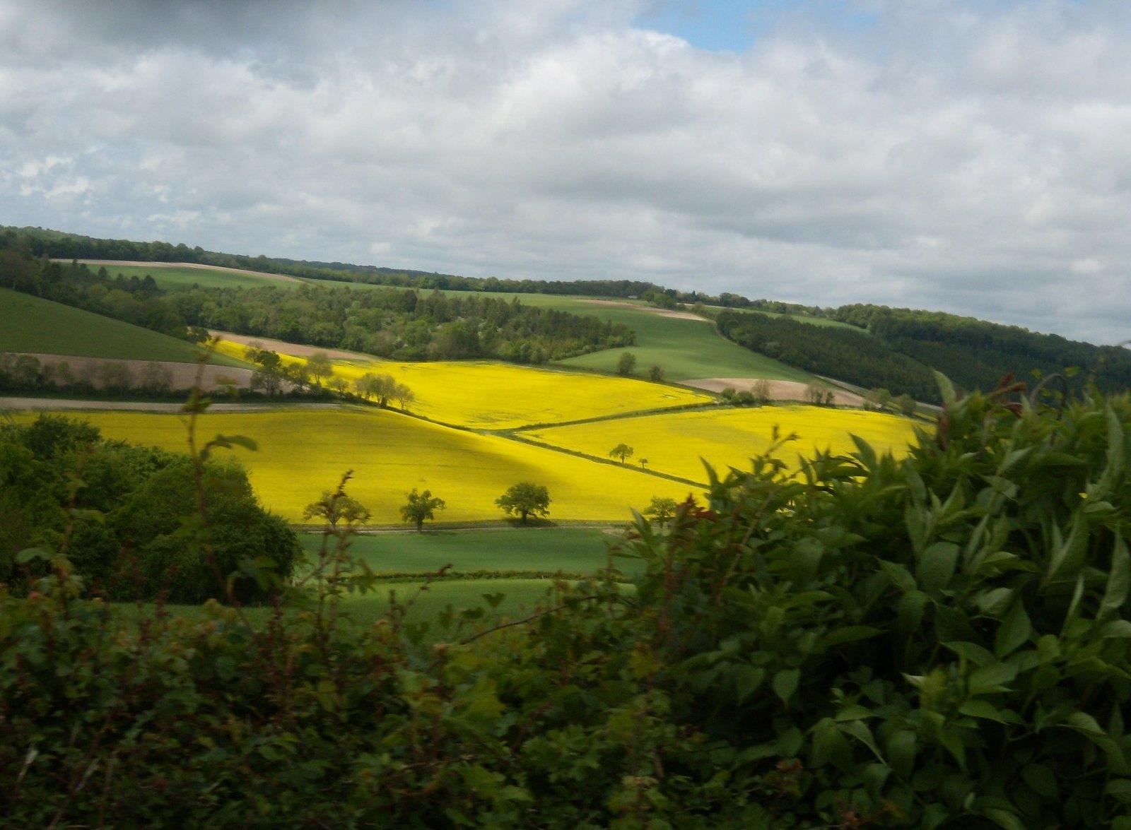 Golden field Henley Circular via Stonor