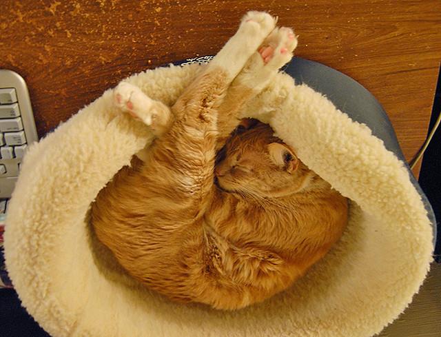 Cat in Fetal Position in Cat Bed