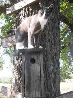 Cat on bird house | by joshme17