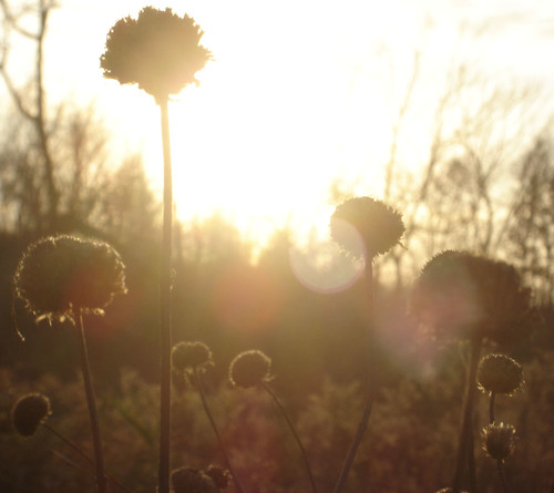 park flowers autumn trees light sunset sky sun flower fall nature silhouette geotagged outside outdoors natural dusk sony iowa lensflare flare vegetation iowacity dscp93 seedball seedballs hickoryhill