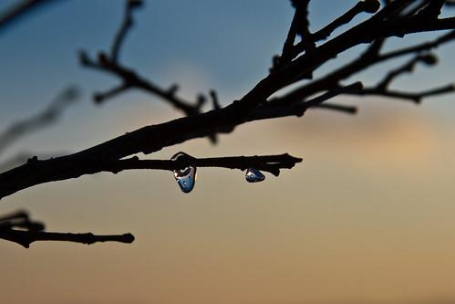 sunset tree ice branch