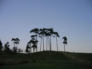 Pluckley - Trees The Pluckley Circular walk.