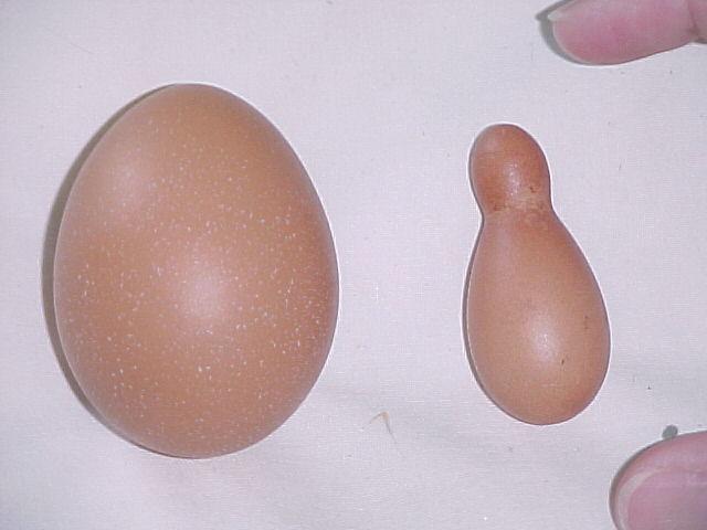 Weird Egg Photos 11
