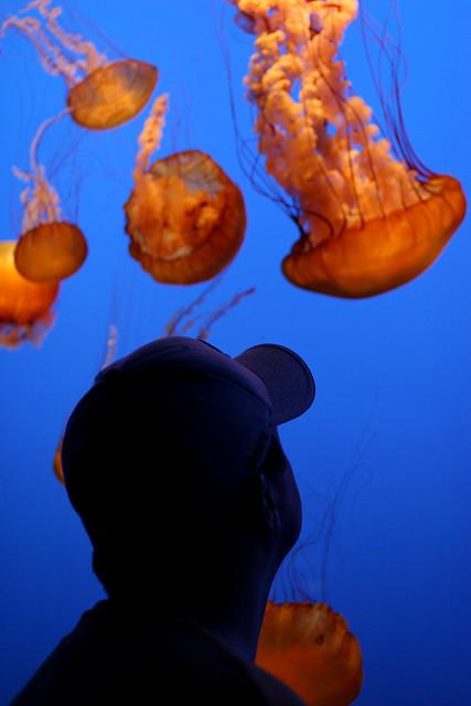 Monterey Bay Aquarium 08