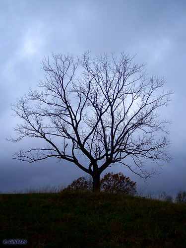 thanksgiving morning tree nature landscape geotagged dawn scenery walnut stormy wv westvirginia lonely hilltop rcvernors cabellcounty