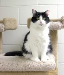 Sienna, A Beautiful Girl Cat