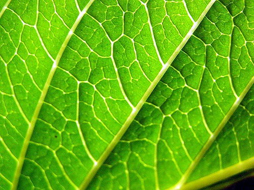 Leaf | by Ken McMillan