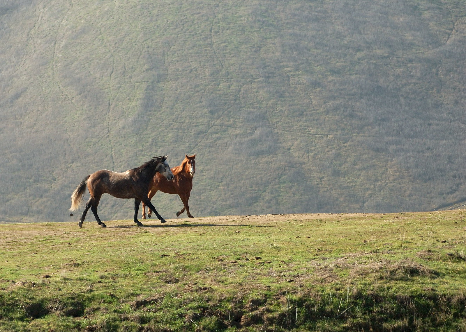 Horses in Ed R. Levin County Park