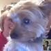 Webcam with Izzy