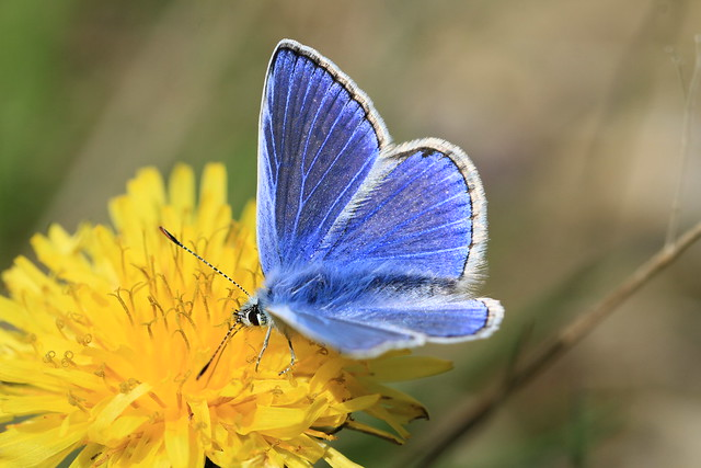 The First Picture Of Blue, The First Picture Of Summer