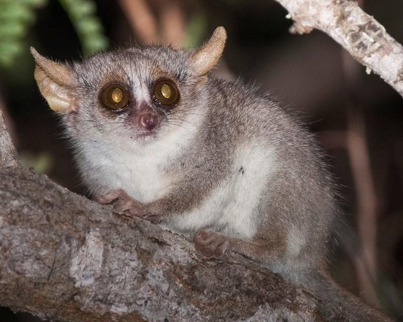 Madagascar 2007 - 1245