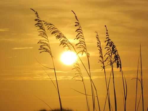 sunrise sunsets