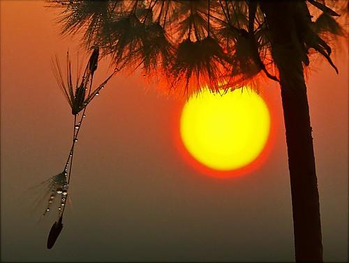 fab sky sun sunrise photography dawn topf50 bravo topv222 dandelion dew algo dandy blueribbonwinner magicdonkey 50f 10faves abigfave anawesomeshot 200750plusfaves superbmasterpiece diamondclassphotographer flickrdiamond thperfectphotographer