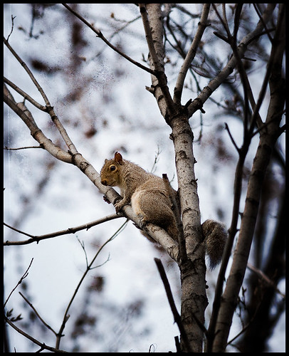Perched, Peering