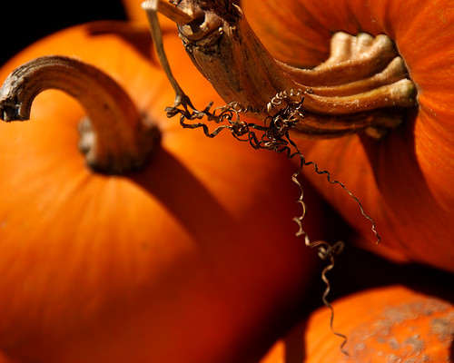 orange pumpkin pumpkins curls keith stems flowrbx blueribbonwinner miniwalk rocaberryfarm mywinners abigfave flickrgold superbmasterpiece s2even astunningmoment miniwalk20071022 miniwalkswkeith 200071022