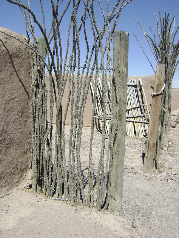 fort uses ocotillo2