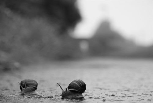 Snails thinking | by Lee Carson
