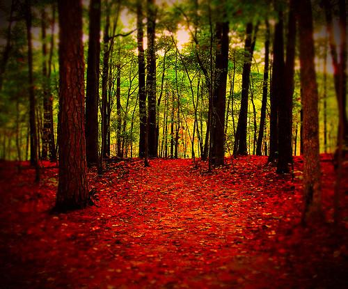 trees light red green nature forest landscape woods floor northcarolina raleigh trail vignette chrysti umsteadstatepark