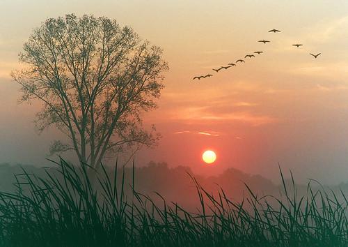 morning sun mist tree loss fog sunrise wow landscape death dawn geese bravo quality meadow 100v10f grief daybreak jelke blueribbonwinner mywinners anawesomeshot superbmasterpiece superhearts ysplix