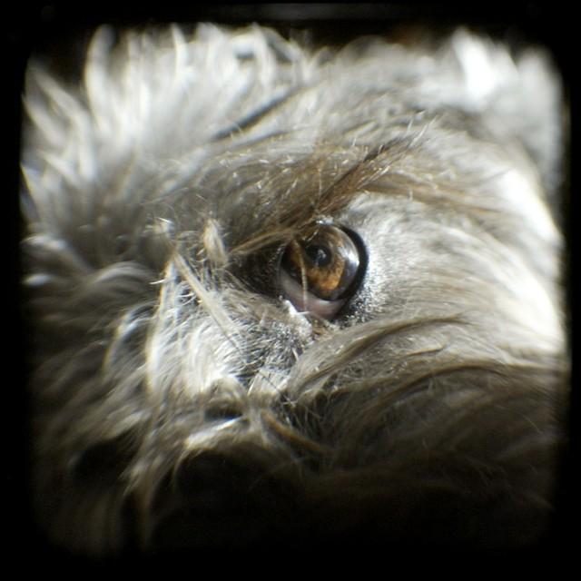 Xena's eye