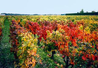 03-Vignes | by Alain COSTE