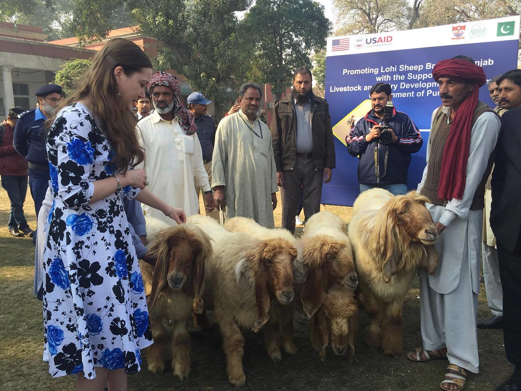 USAID PEEP Supports Goat and Sheep Breed Improvement in Pu