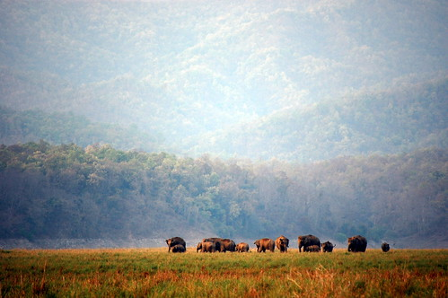 Wild Elephants | by sunilgarg