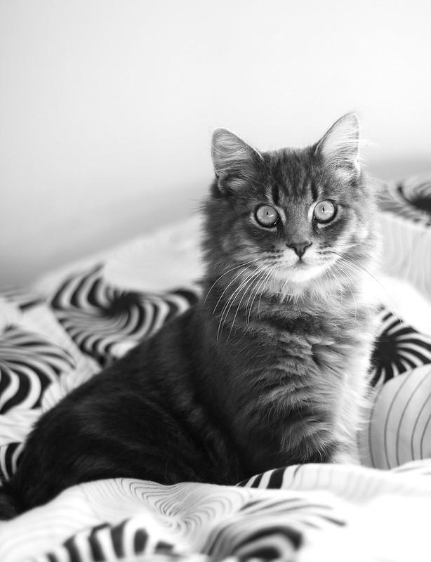 Handsome Gideon